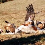 w-elisabeth-reveillon chez les vautours