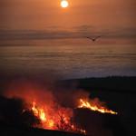 w-Bernard-Survol des feux