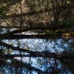 w-elisabeth l'étang noir